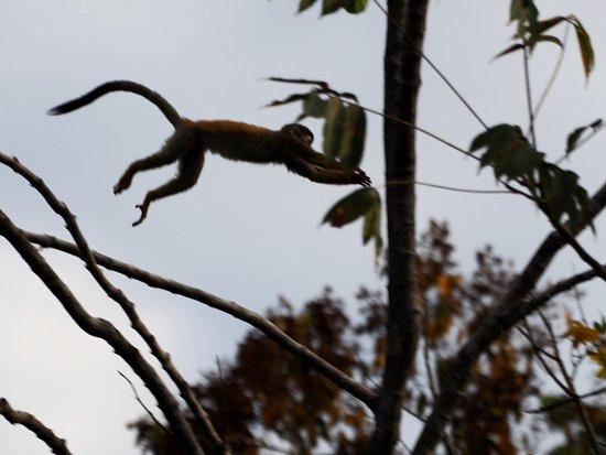 Hotel Plaza Yara: monkeys in the morning!