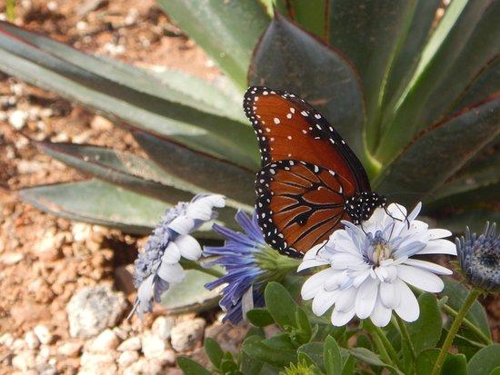 Desert Botanical Garden: Butterfly Habitat
