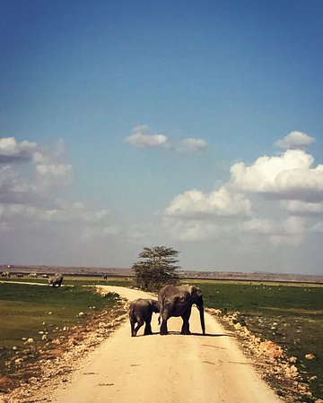 Amboseli National Park, Kenya: photo8.jpg