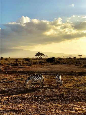 Amboseli National Park, Kenya: photo9.jpg