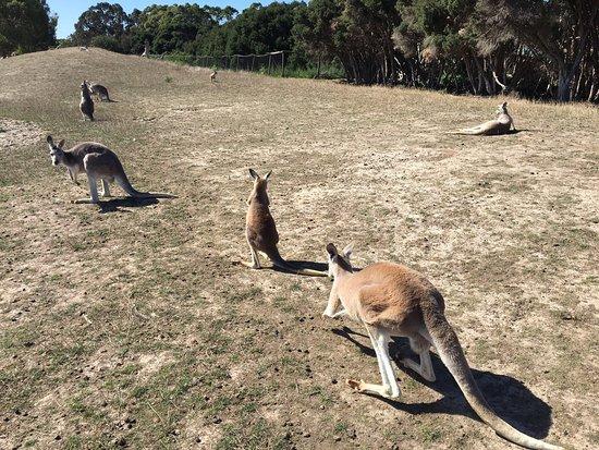 Cowes, Australië: photo0.jpg