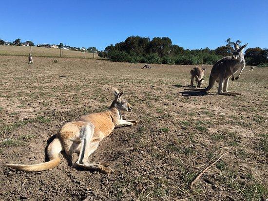 Cowes, Australia: photo1.jpg