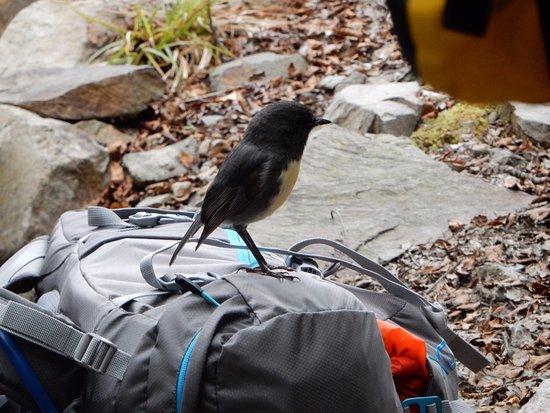 Westport, New Zealand: The birdlife is very tame