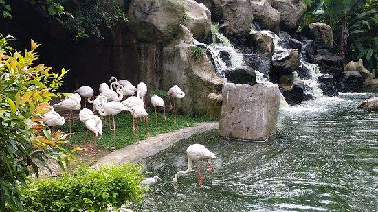 Kuala Lumpur Bird Park: flamingoes