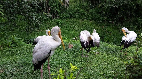 Kuala Lumpur Bird Park: birds