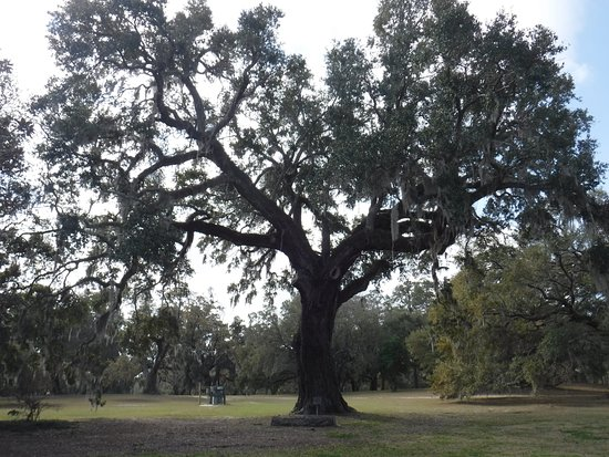Murrells Inlet, Güney Carolina: Constitution Oak