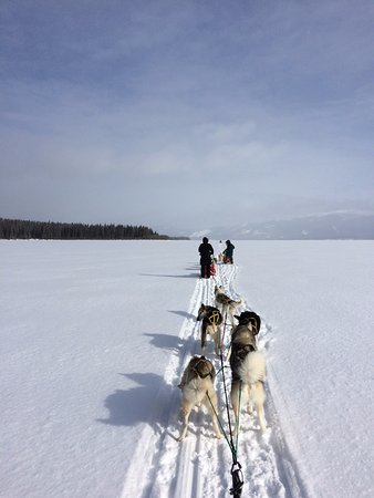 Carcross, Canada: mushing across the yukon (Tagish Lake)