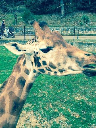 Ardeche, Frankrijk: Peaugres Safari Parc