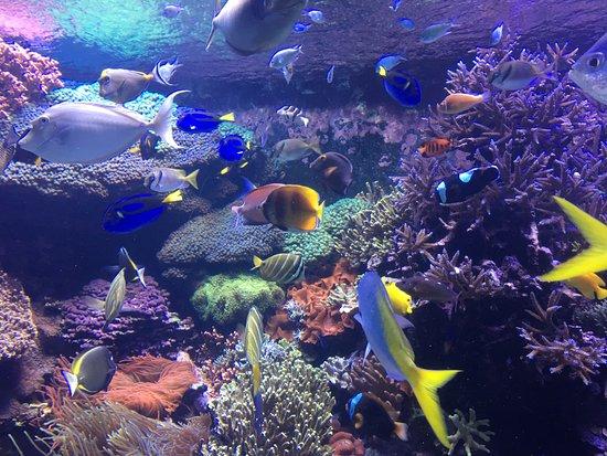 Downtown Aquarium: Los colores de estos peces son un gran atractivo