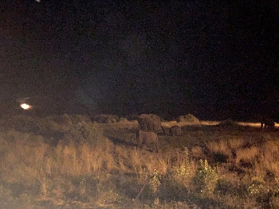Elephant Valley Lodge: not the greatest photo, technically, but you get the idea or elephants by moonlight!