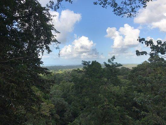 Manzanillo, Kosta Rika: Nature Observatorio