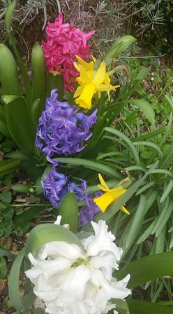 Alfriston, UK: Flowers