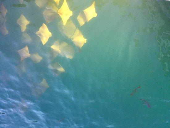 安雅米亞海濱飯店照片