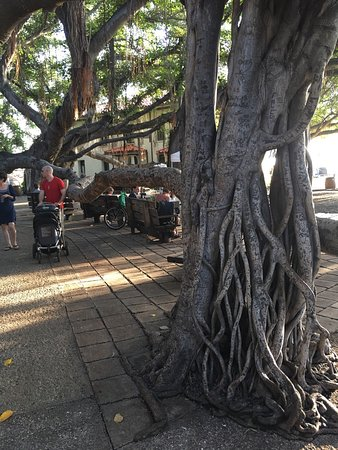 Photo of Monument / Landmark Banyan Tree Park at Front Street, Lahaina, HI 96761, United States