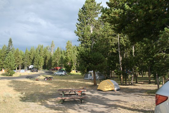 Bridge Bay Campground: Tent site.