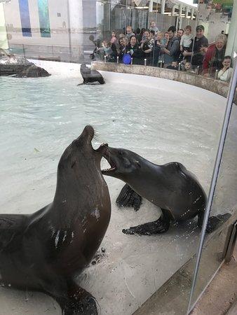 New England Aquarium : Sea Lion Show