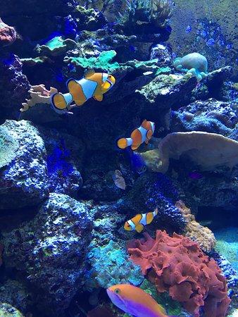Tennessee Aquarium: photo0.jpg