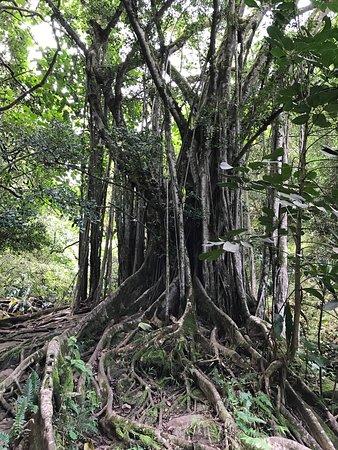 Makawao, هاواي: photo1.jpg