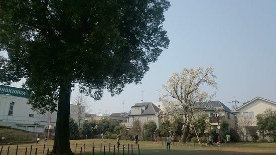 Musashino, Japan: DSC_1616_large.jpg