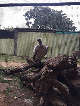Hoedspruit, Sør-Afrika: Moholoholo Wildlife Rehab Centre