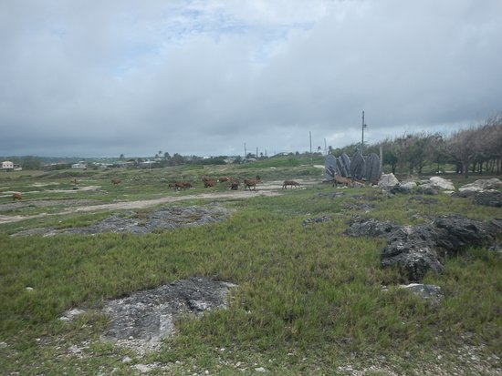 Saint Lucy Parish, Barbados: View of landscape surrounding the cave