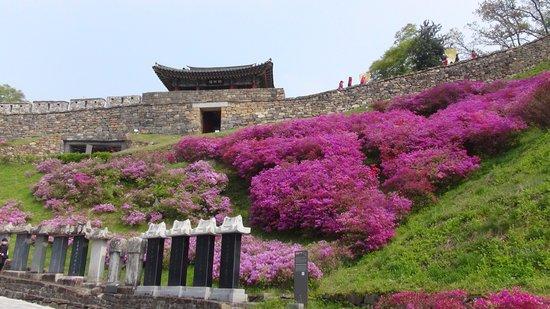 Gongju, Южная Корея: 登り口よりのパン 花が咲いてなければ価値はない?