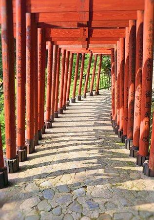 Kashima ภาพถ่าย