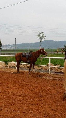 Kfar Yehezkel, İsrail: סוסים מהממים