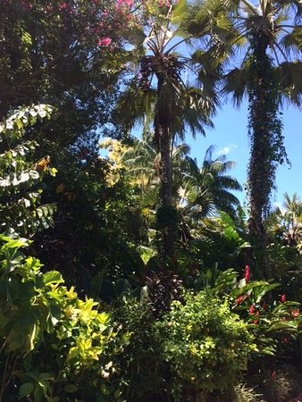 Cairns Botanical Gardens: tropical beautiful place