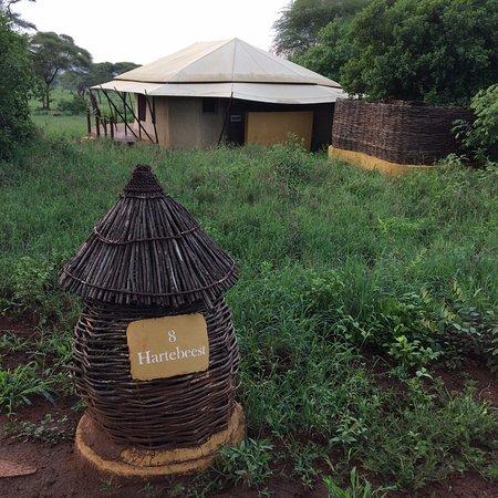 Sanctuary Swala: Our tent - Hartebeest