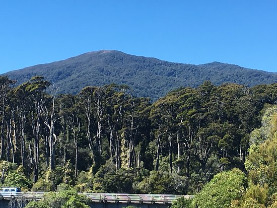 Haast, New Zealand: Dense forest