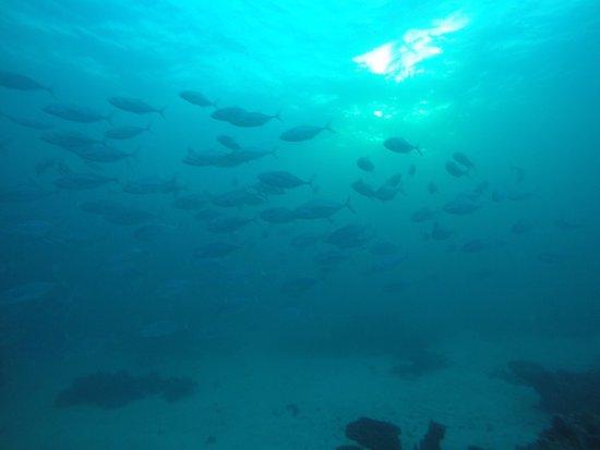 Coral Bay, Australia: photo3.jpg