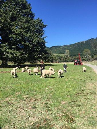 Ngongotaha, Selandia Baru: photo1.jpg