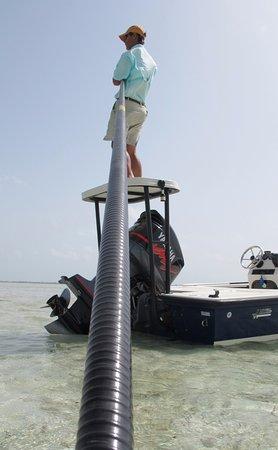 North Caicos: Stalking bonefish