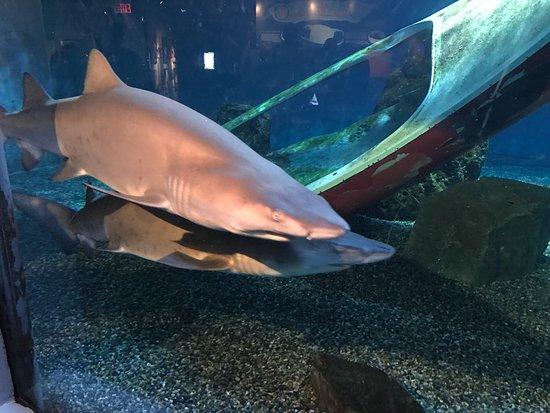 Mystic Aquarium: photo0.jpg