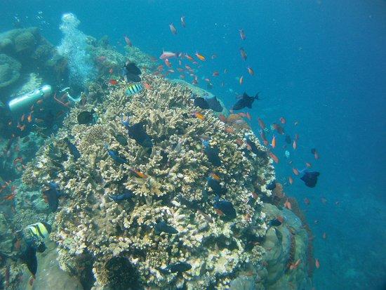 Padangbai, Indonesia: Momo Dive Center