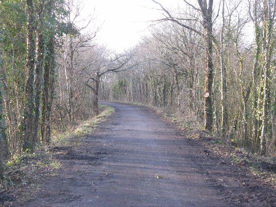 Devon, UK: The Tarka Trail looking north towards Yarde
