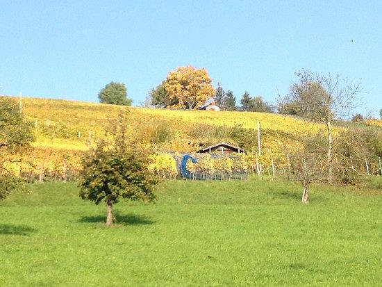 Ruinen Wartenberg & Rebenweg