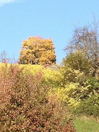 Herbst im Muttenzer Rebberg