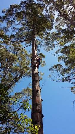 Denmark, Australia: The big tree climb! Very safe and a great challenge for all ages.