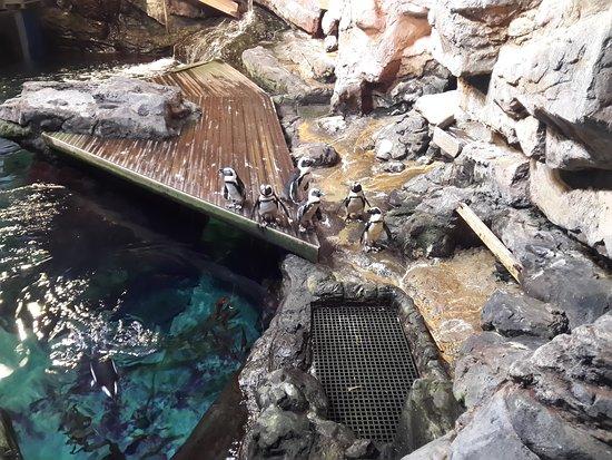 Aquarium Mare Nostrum: 20170318_141544_LLS_large.jpg
