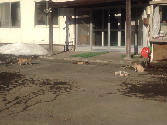Sobetsu-cho, Japón: ネコちゃま達がのんびりしております。最高のお出迎えです(^^)