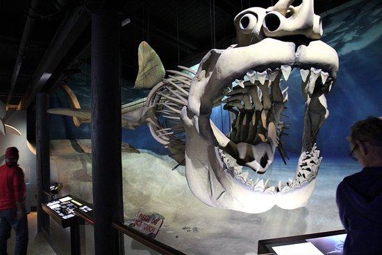Solomons, MD: Shark