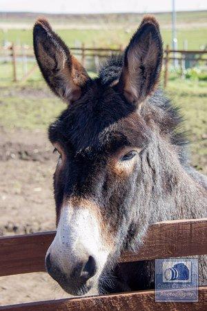 John O'Groats, UK: Jack the donkey