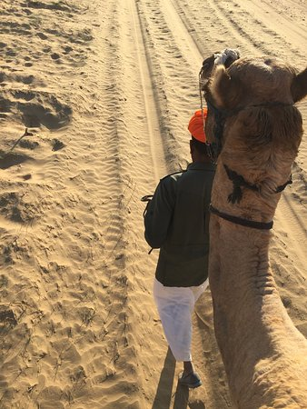 My handsome camel named Mooti