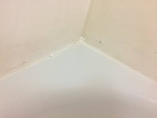 La Quinta Inn & Suites San Antonio Airport: Mold all over bathroom, faucets and in cracks of tub. Walls were in need of a Mr.Clean magic era