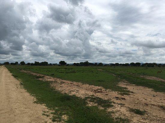 Morogoro, Tanzania: A huge herd of elephants!