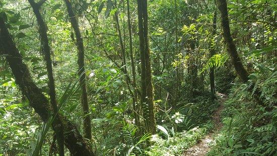 Kinabalu Park : one of the walks