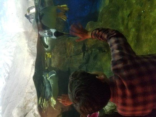 Tennessee Aquarium: 20170313_170912_large.jpg