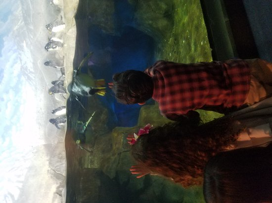 Tennessee Aquarium: 20170313_170907_large.jpg